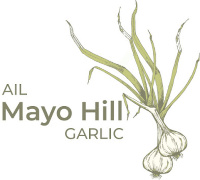 mayo hill garlic
